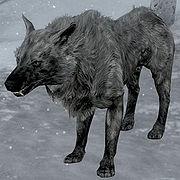 Ice Wolf.jpg